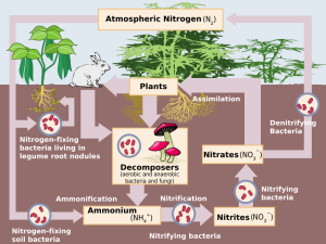 nitrogencycle